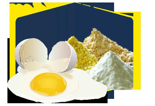 Shell egg, liquid, dried egg converting industry