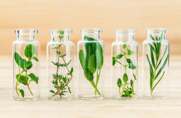 گیاهان دارویی و ارگانیک