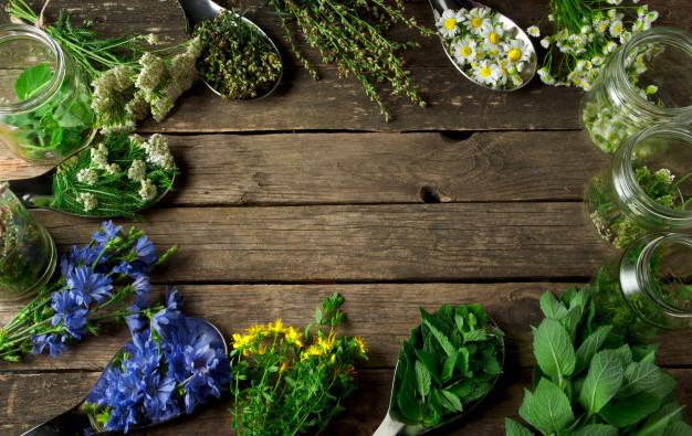 داروهای گیاهی و ارگانیک